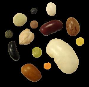 Legumes Secs