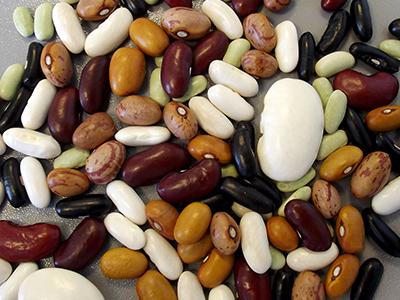 Différentes sortes de haricots